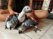 Плодородные попугаи и попугаи для продажи